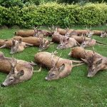 За полювання з тепловізором – кримінальна відповідальність